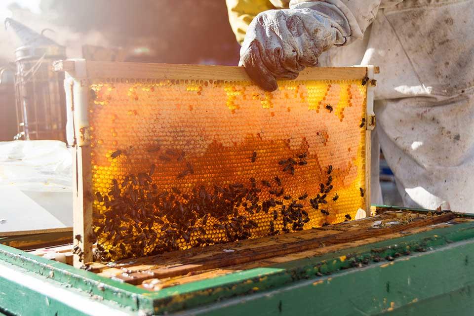 μελισσοκομία ΕΣΠΑ